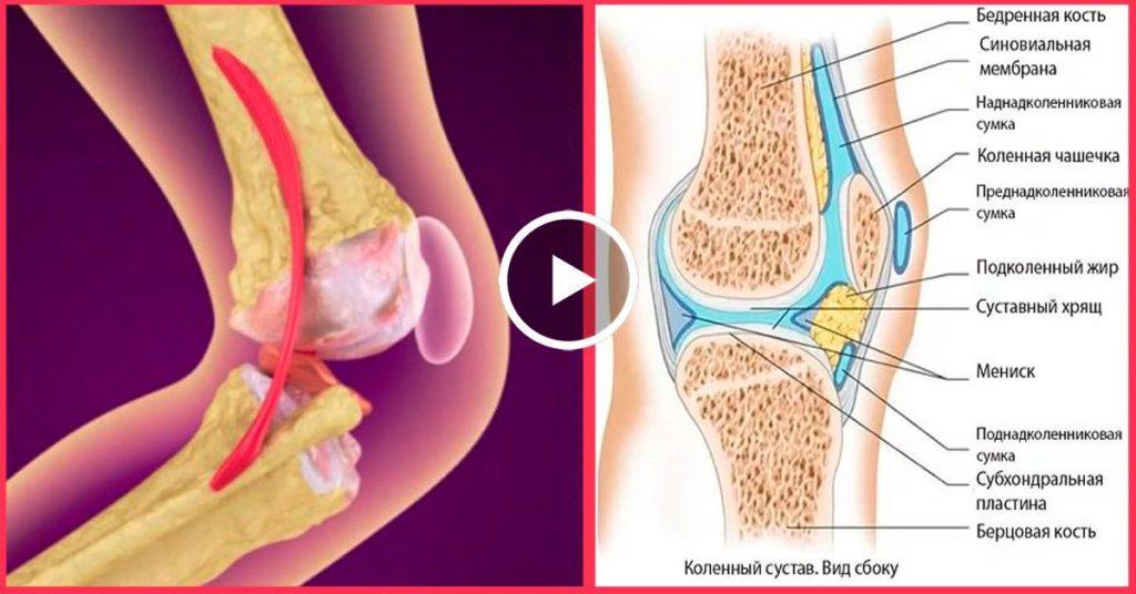 Ваши суставы растяжка мышц коленного сустава