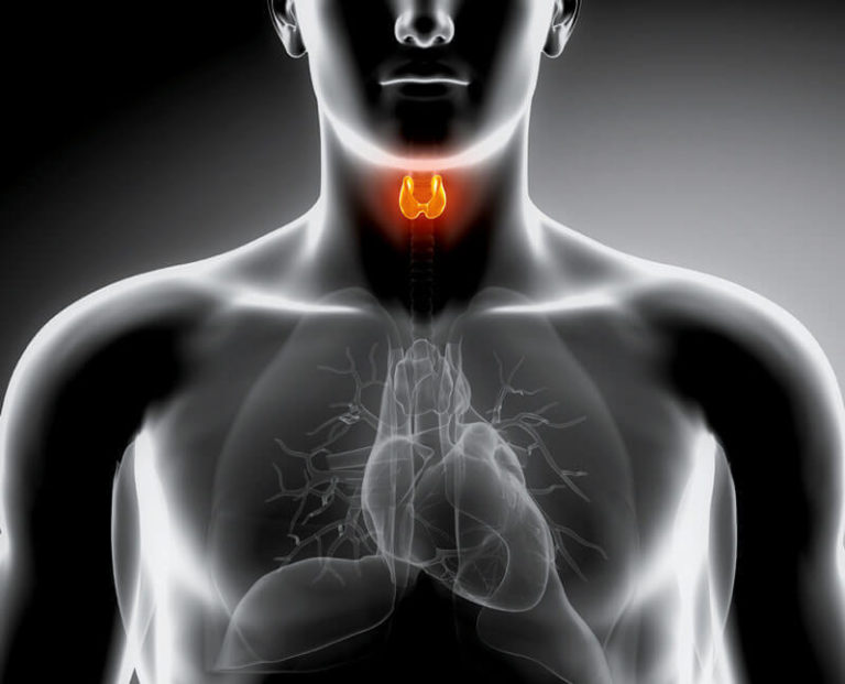 thyroid cancer research paper Topics in this paper cancer surgery thyroid cancer goiter or thyroid nodules, and thyroid cancer thyroid cancer important research into thyroid cancer.